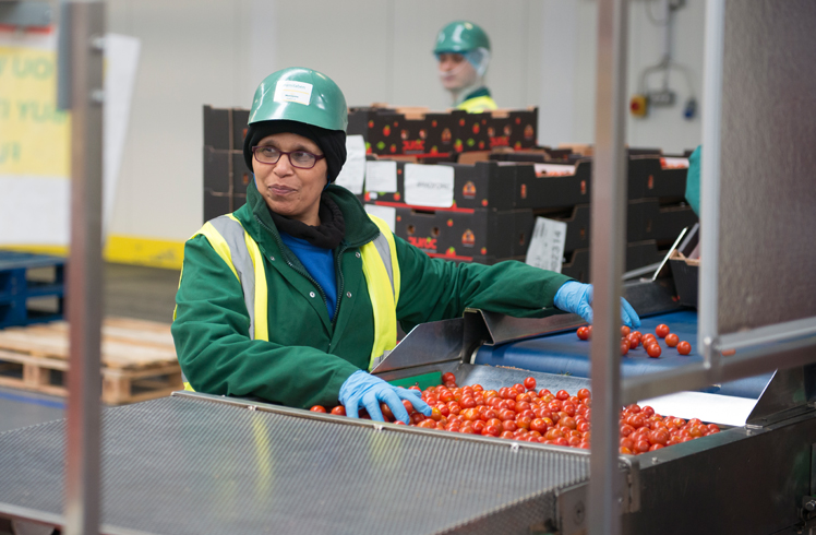 Manufacturing tomatoes
