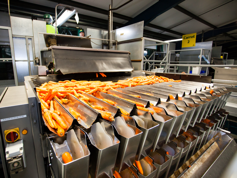 Carrot production at our Gadbrook site in Cheshire