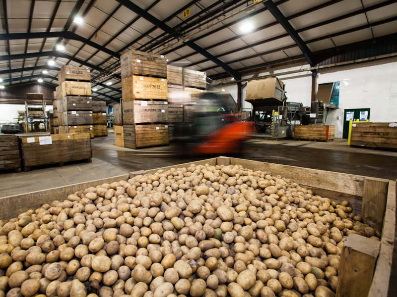 We pack 154,000 tonnes of potatoes every year.